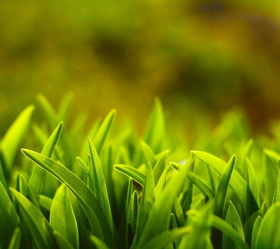 Hd Green Grass