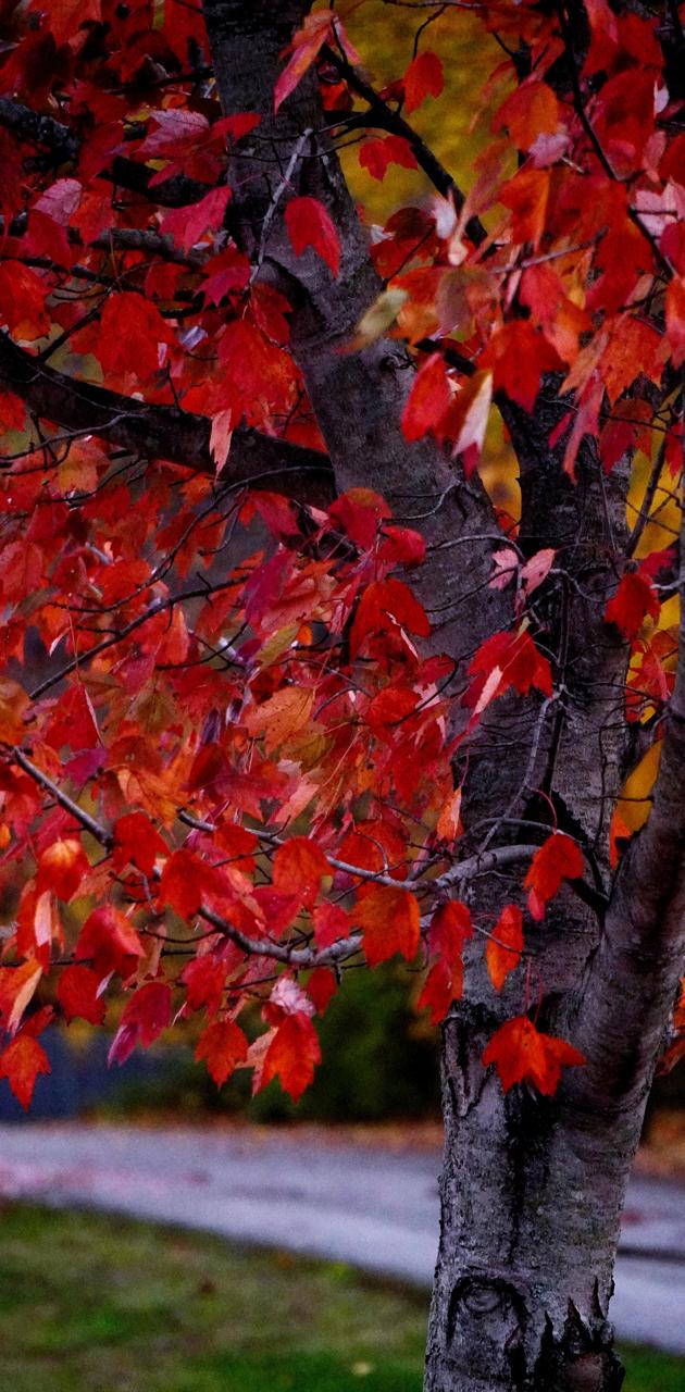 Vivid Fall Tree