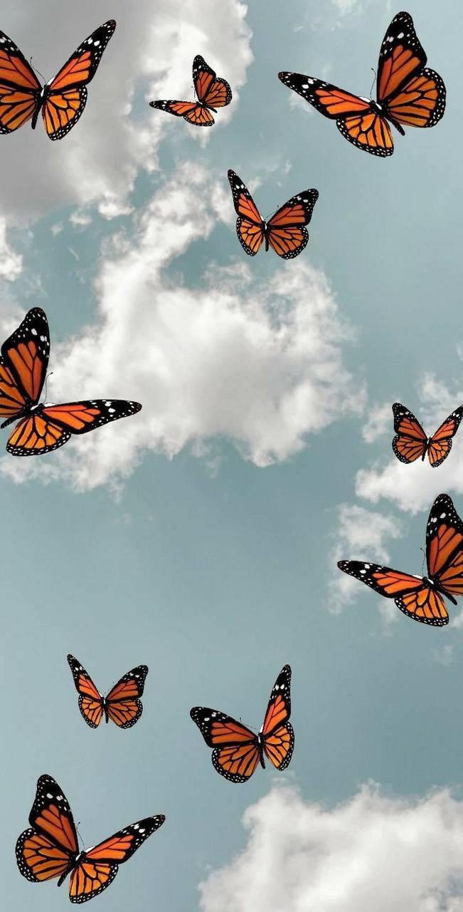 aesthetic butterfly wallpaper by tavininho