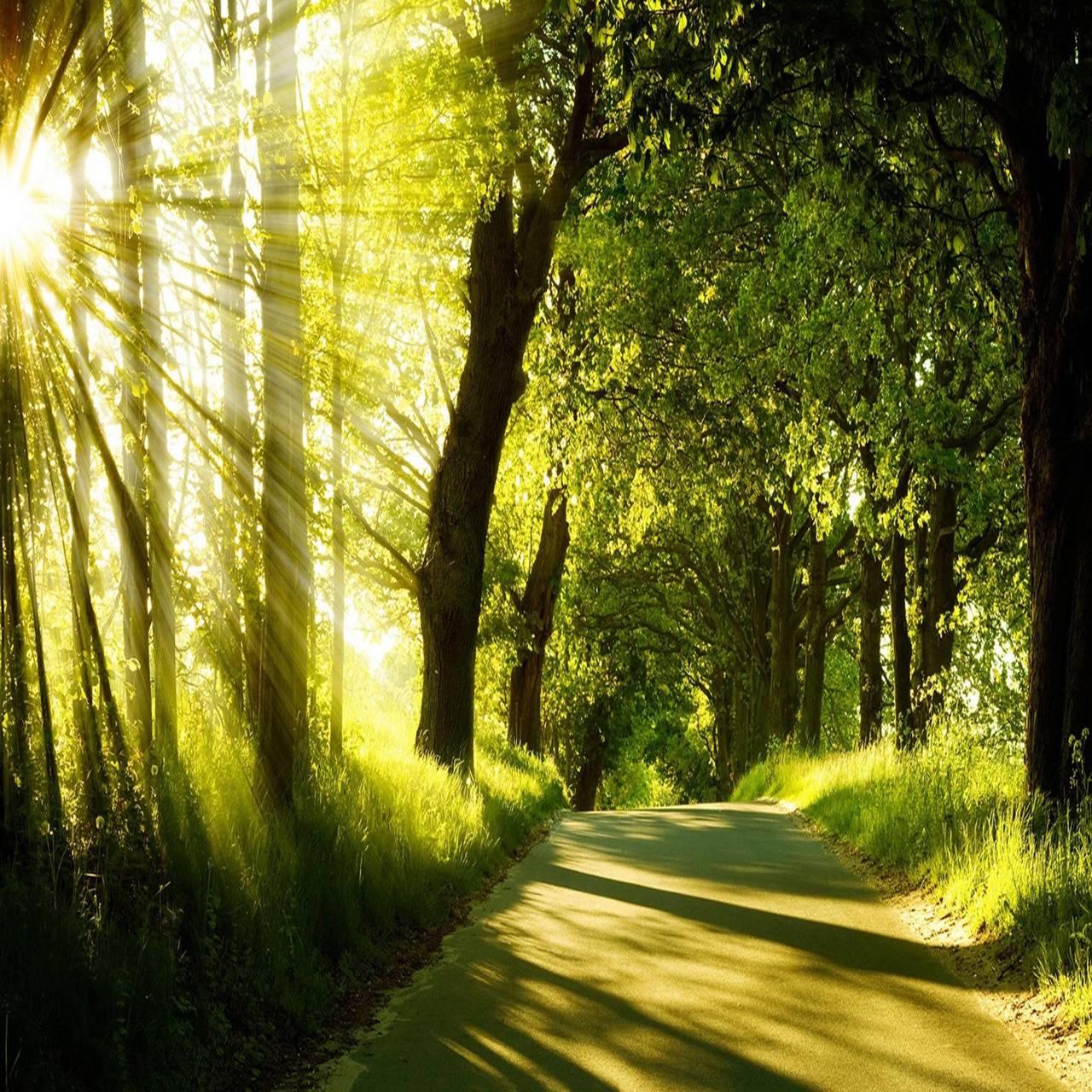 Sunrise springForest