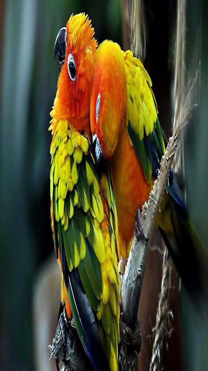 Cute parrots