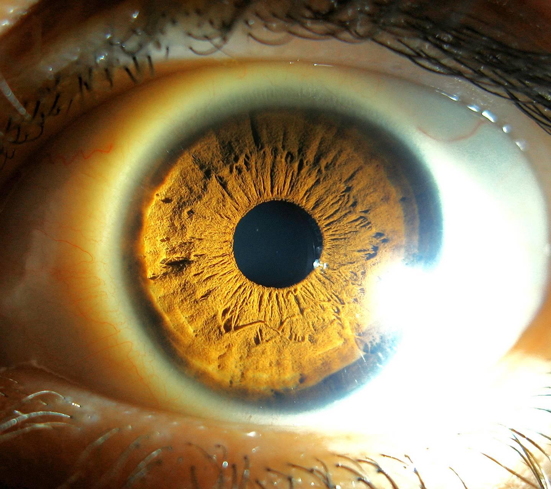 Eye Like World