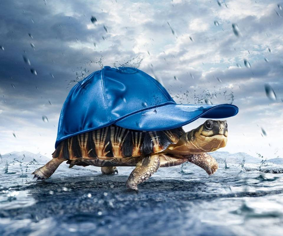 Turtle In The Rain