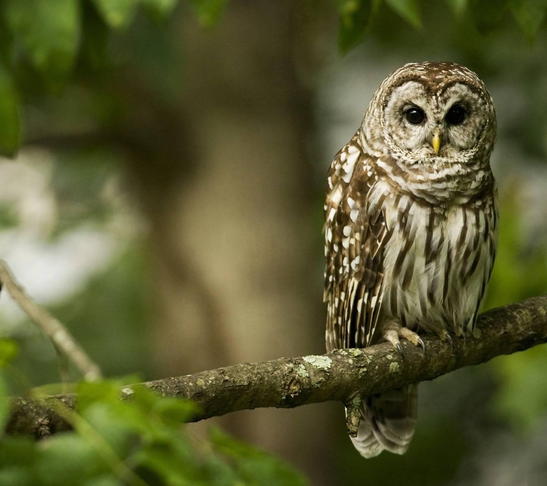 Owl On Branch Hd