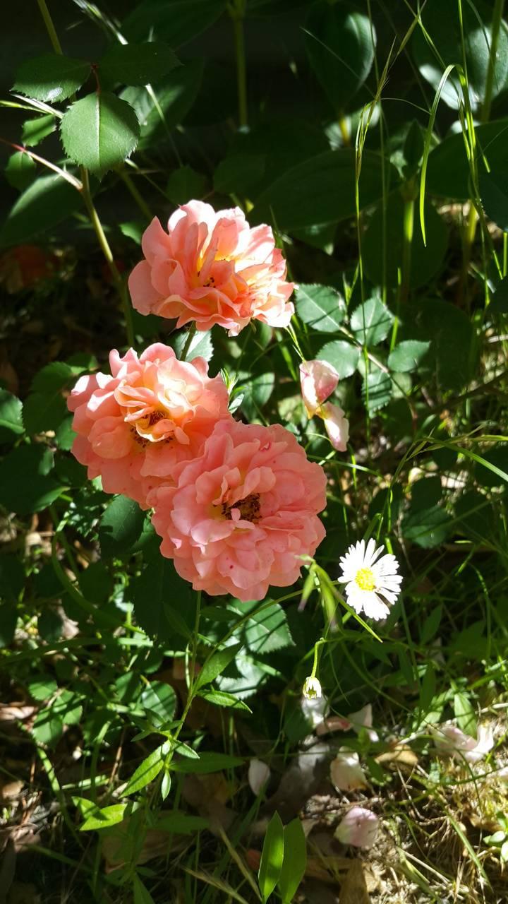 And a daisy