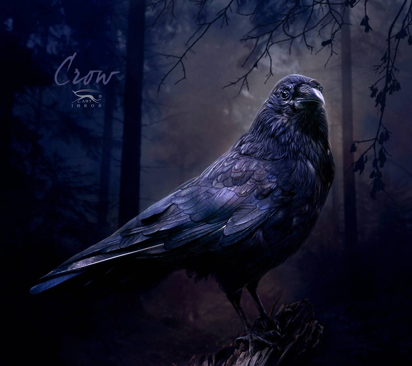 midnight crow