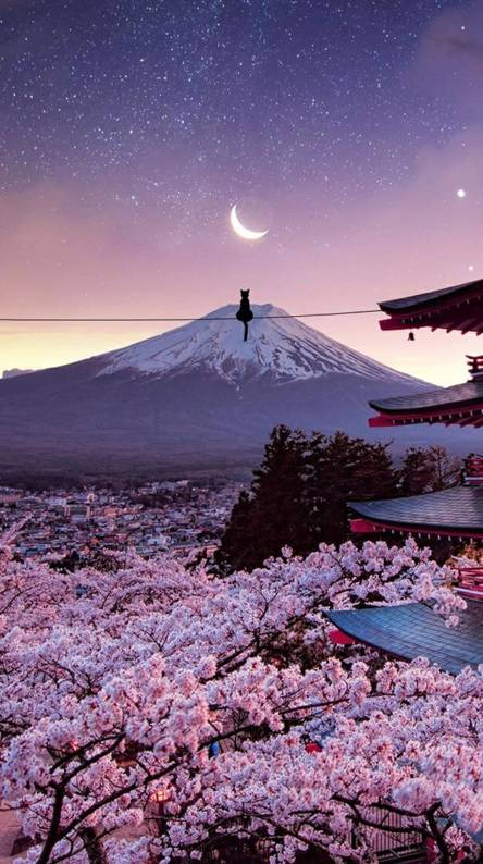 Japan Wallpapers - Free by ZEDGE™