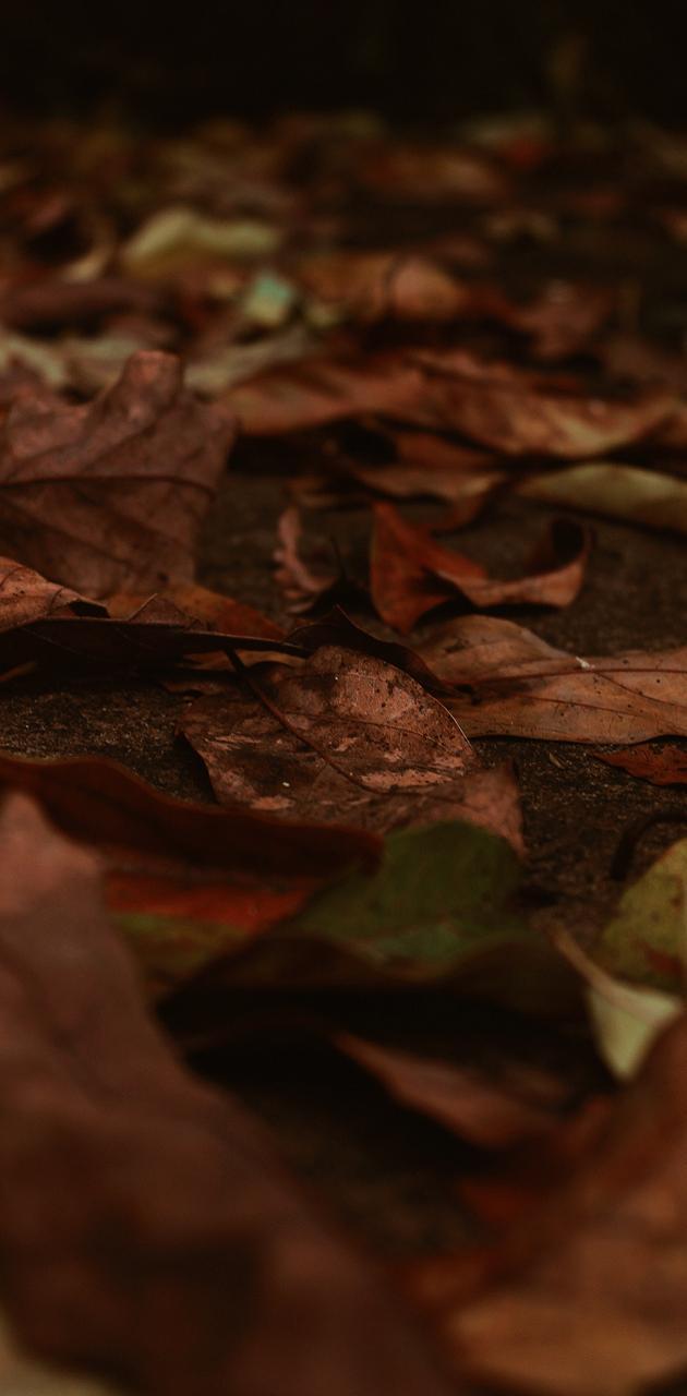Folhas caidas