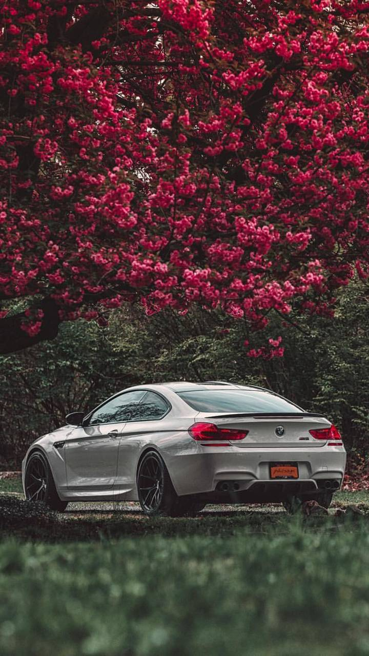 Bmw M6 Wallpaper By P3tr1t 5b Free On Zedge