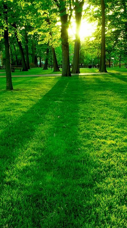 Grass Sunrise