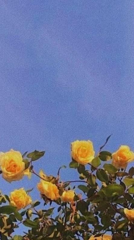 Yellow aesthetic Ringt...