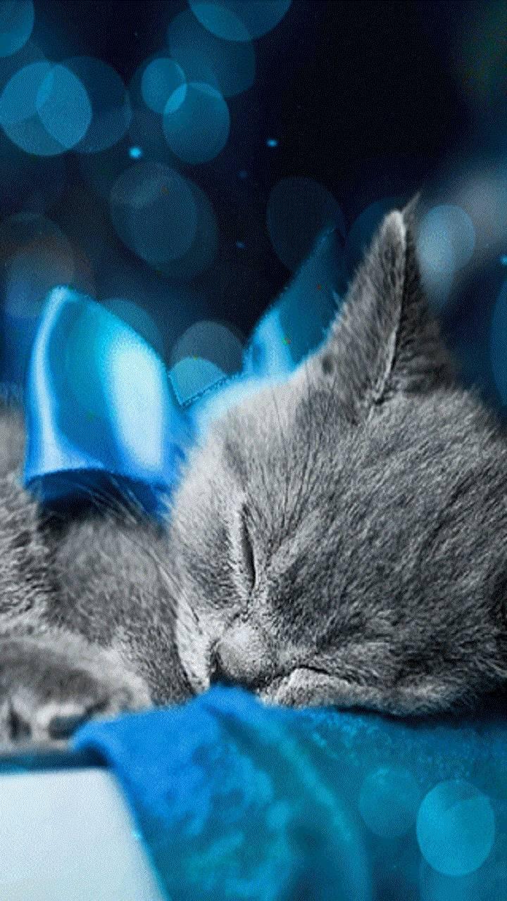 Для, открытки с британским котенком доброй ночи