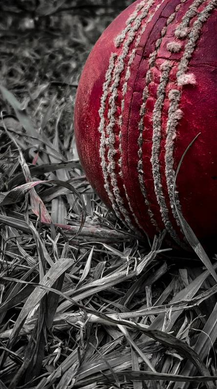 Cricket Wallpapers Free By Zedge