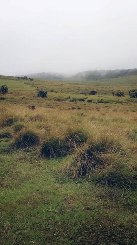 Horton plain