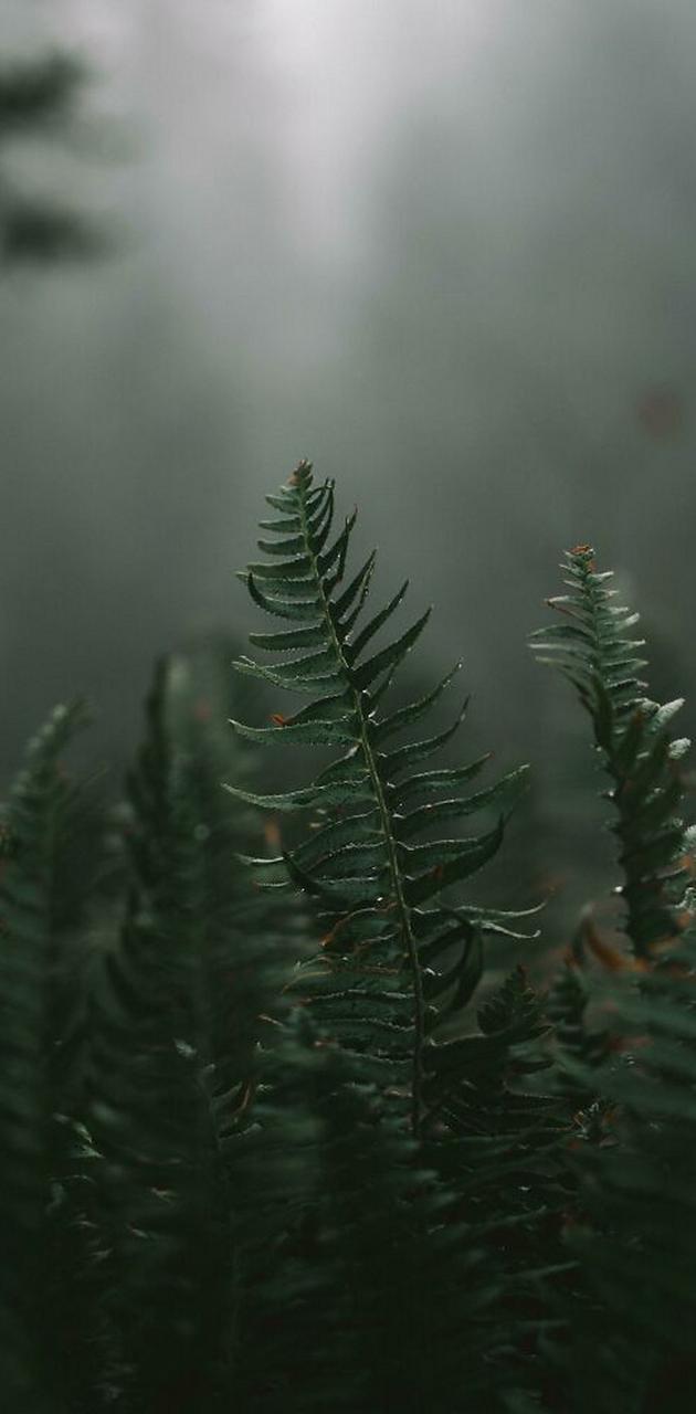 Wildwood ferns