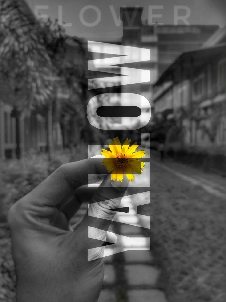 Flower at Aiub