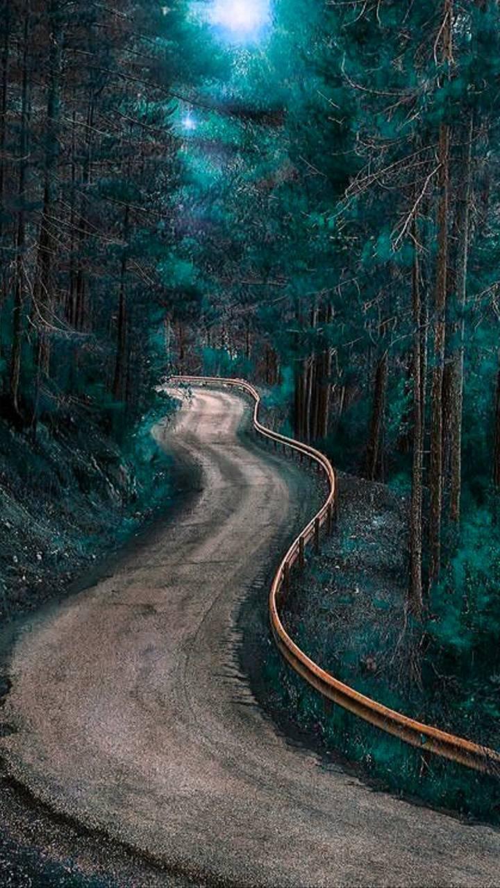 Road between