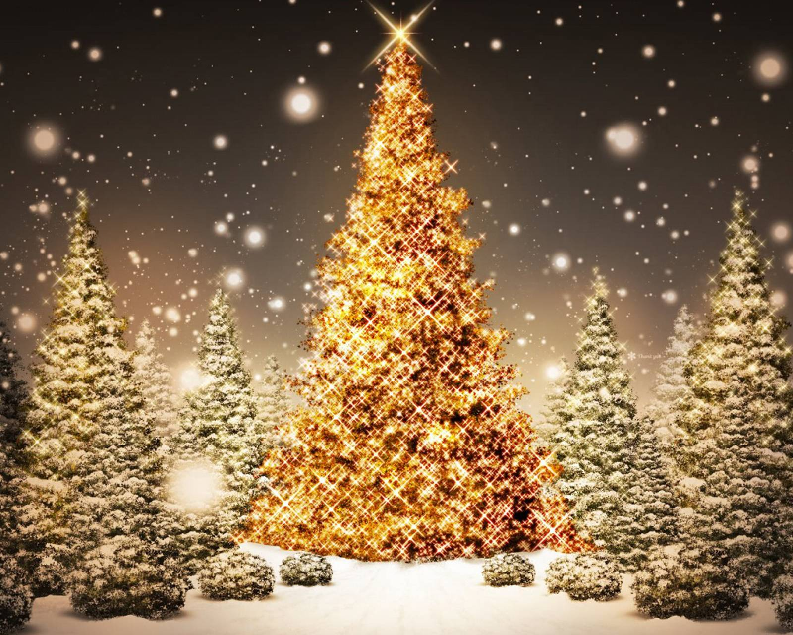Xmas Tree And Lights
