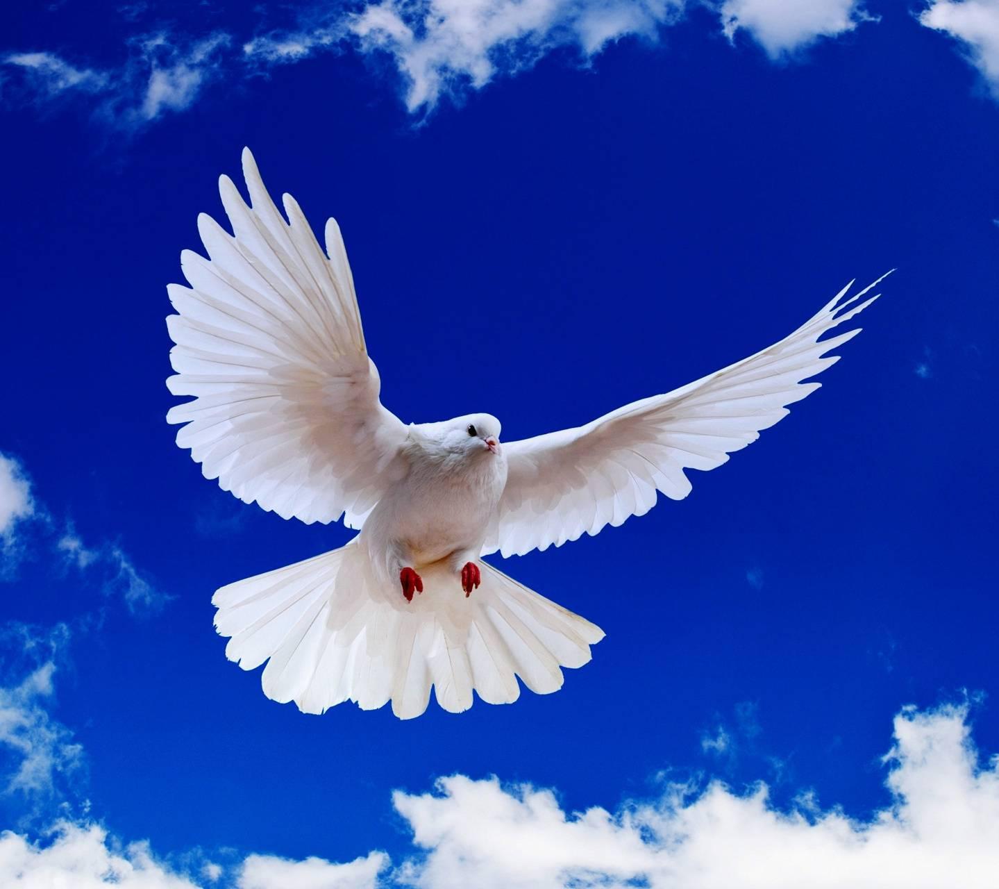 решила картинка голубь спускается может быть виде