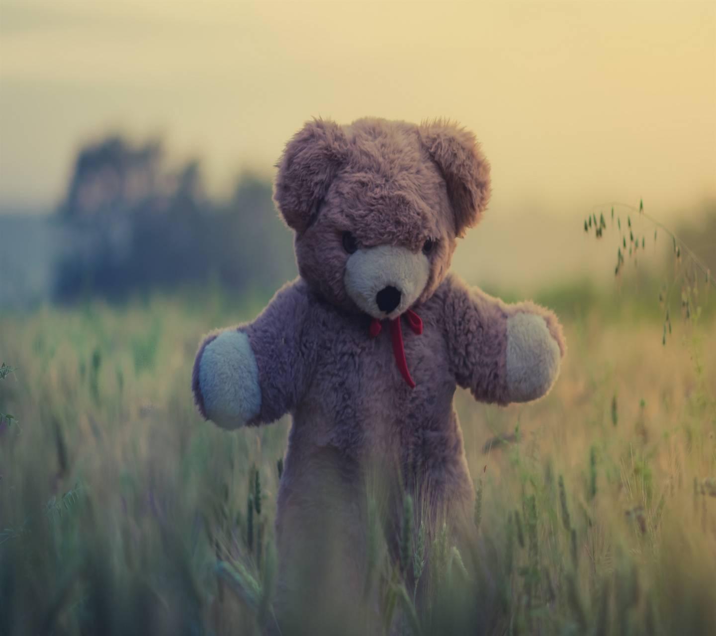 teddy bear toy grass