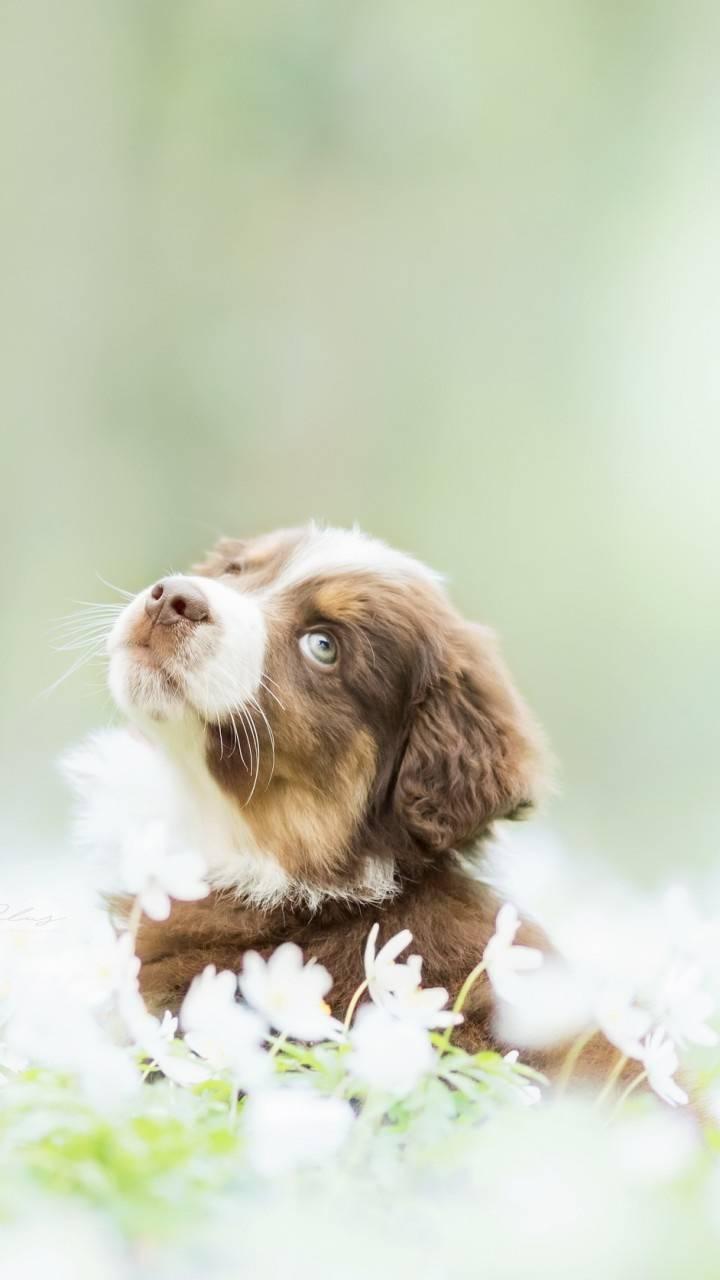 Adorable puppo