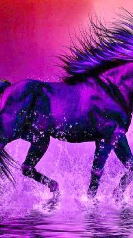 Beautiful Marwari Horses Ringtones And Wallpapers Free By Zedge