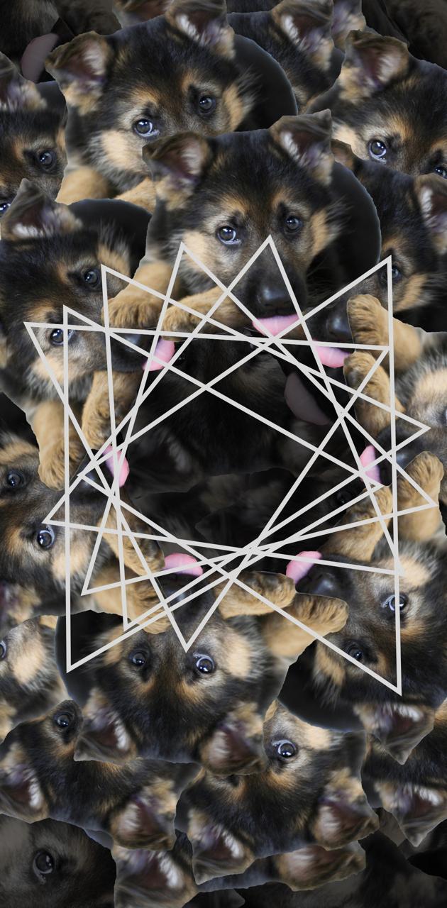 Kaleidoscope puppy
