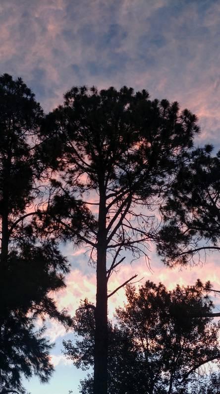 Freedom Trees