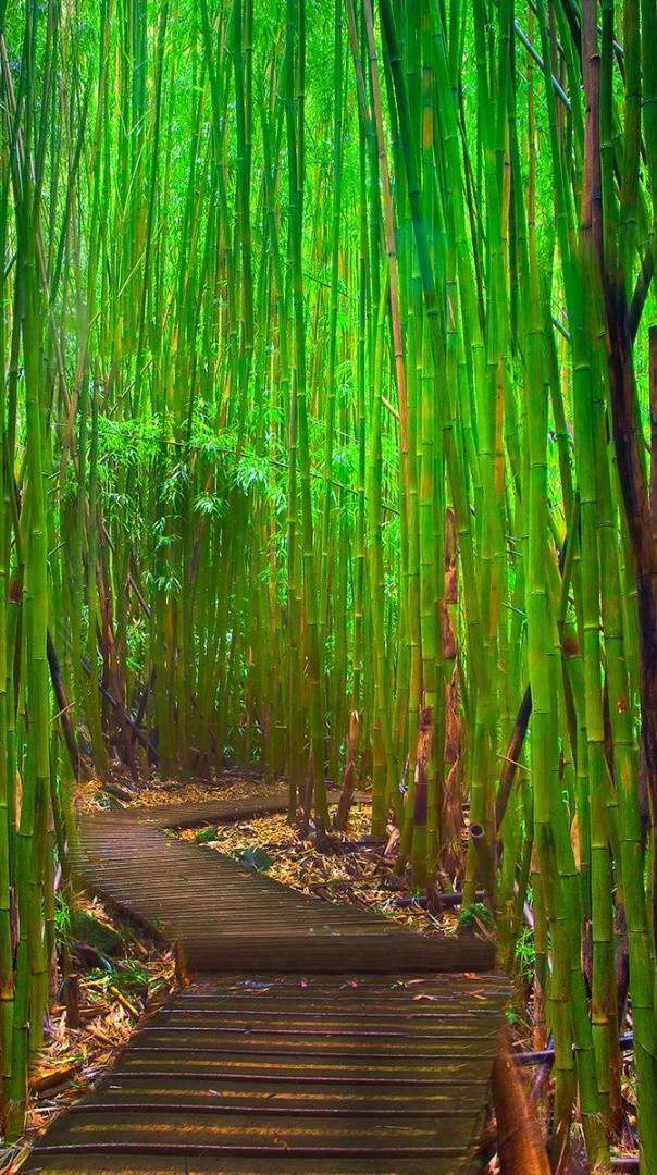 Bamboo Alley