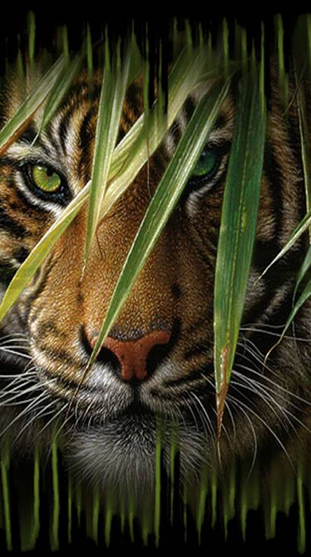 Wild Cat Hd Wallpaper Ringtones And Wallpapers Free By Zedge