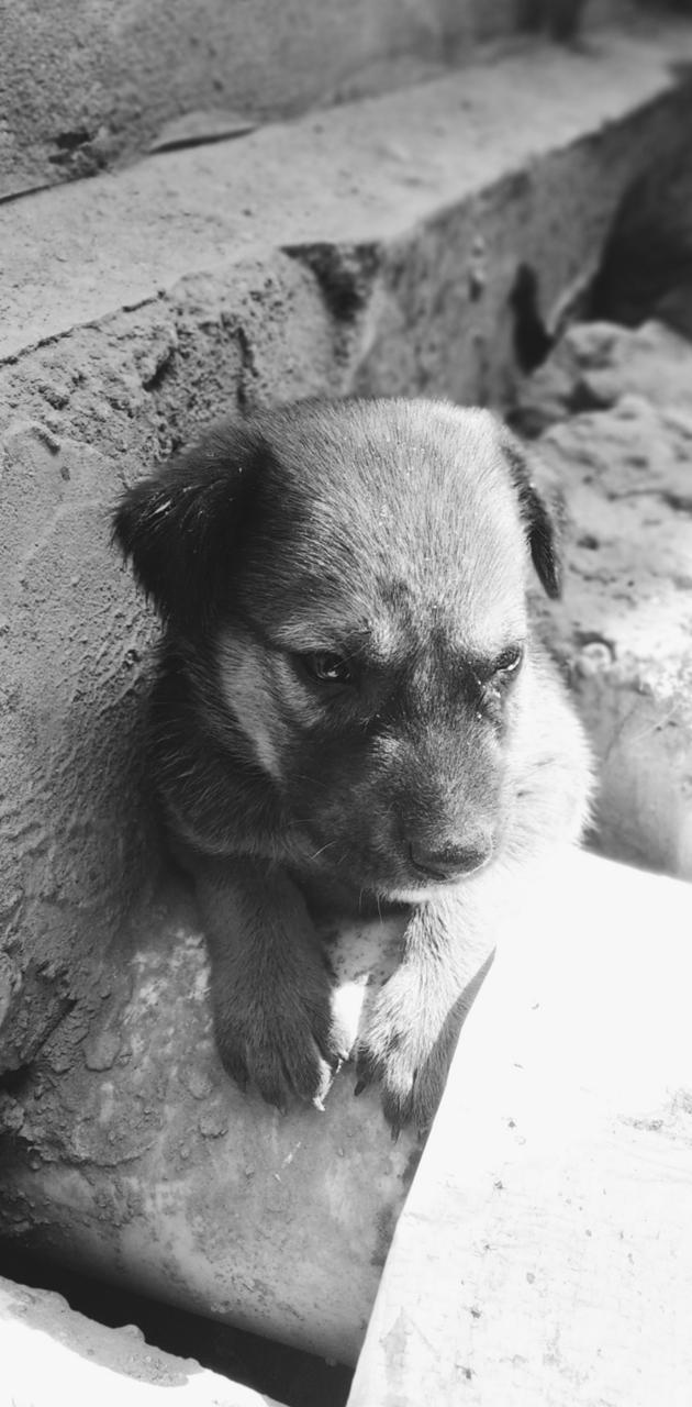CuteDog