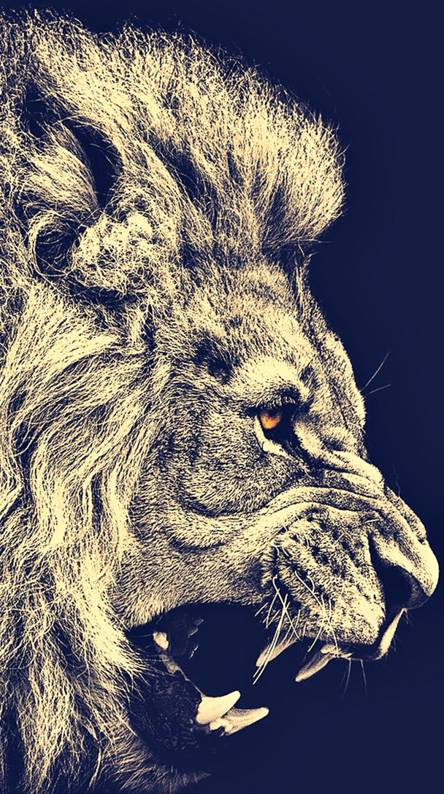 Lion Wall