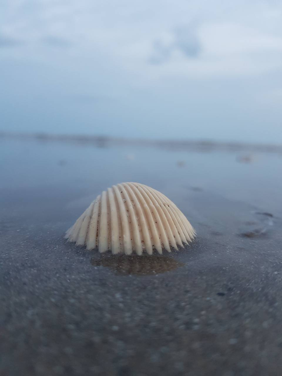 Sea gills