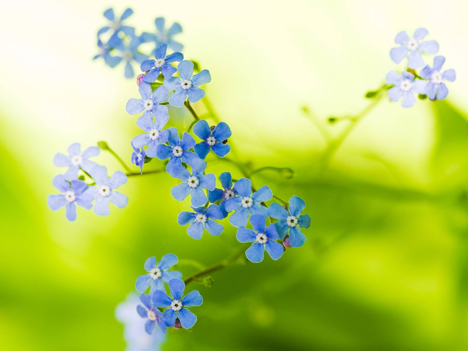 Green Blue Flowers