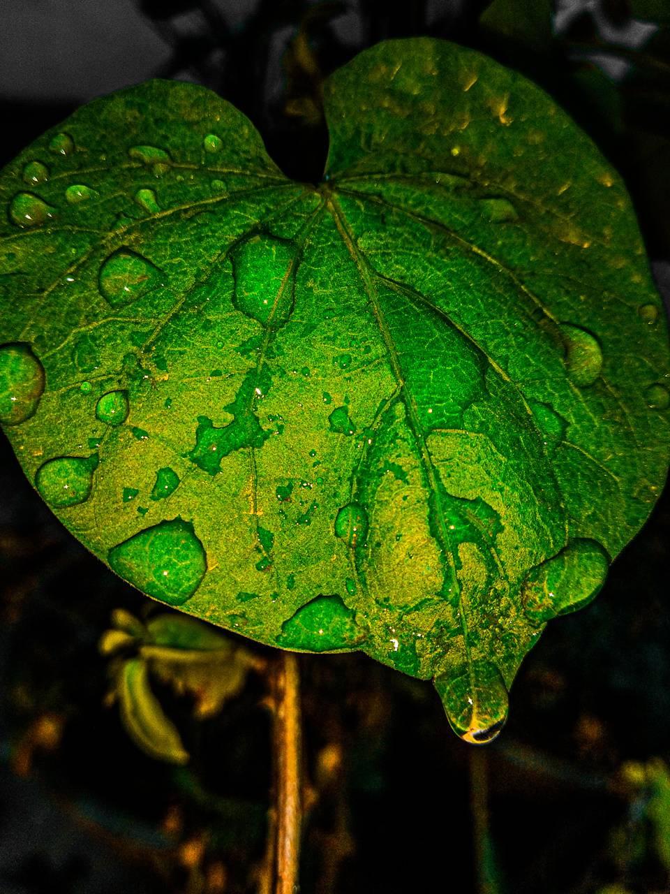 Massive Leaf