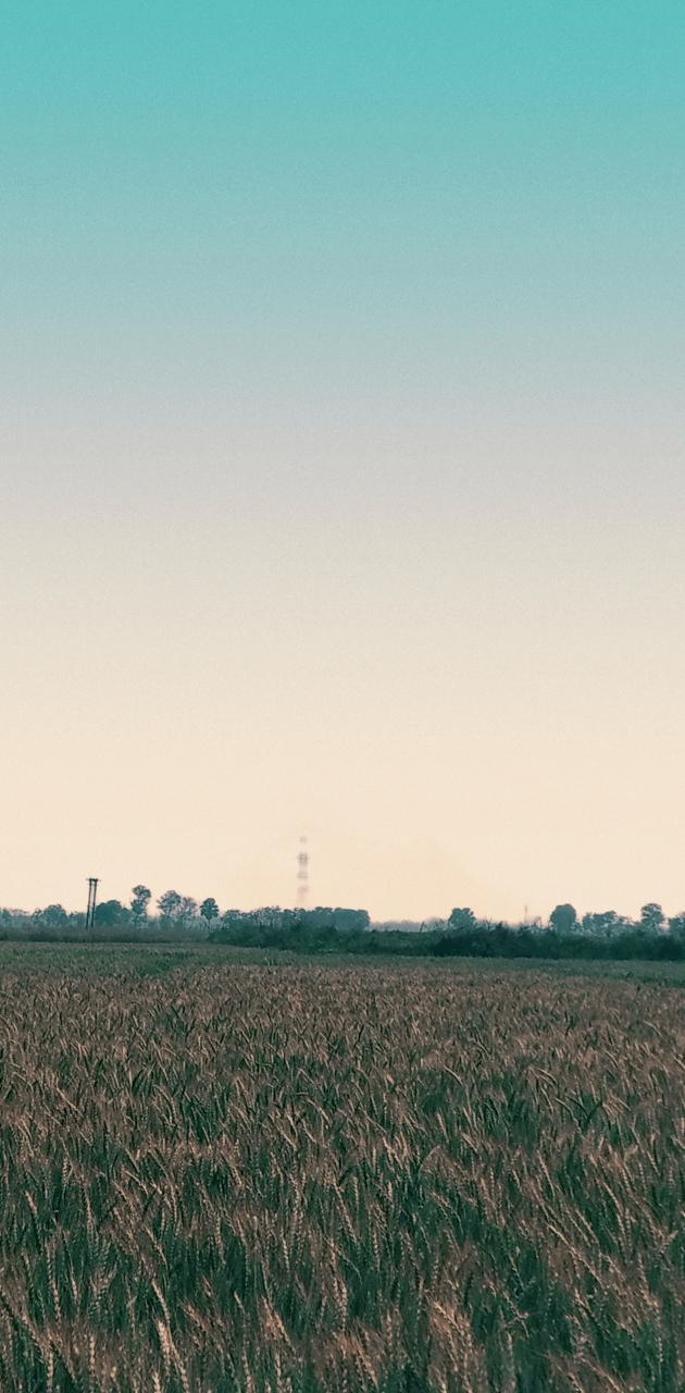 Farm And Sky