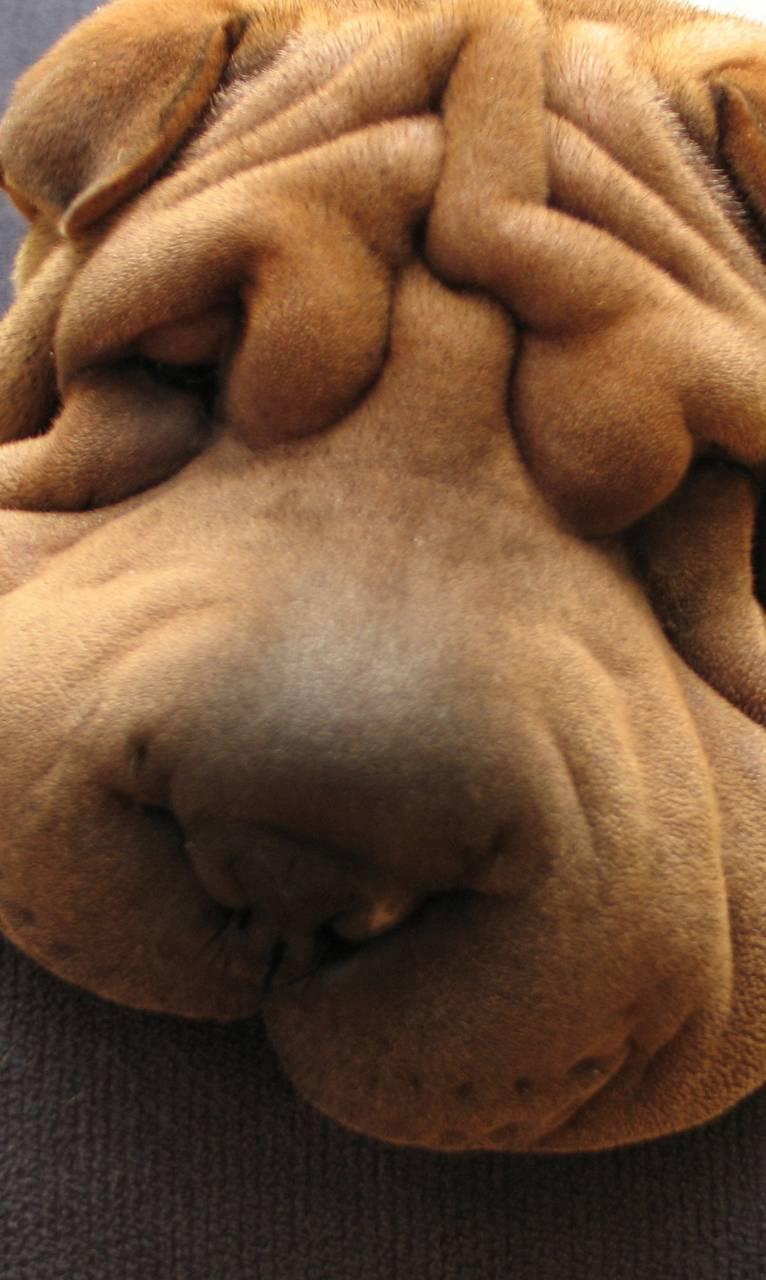 Unhappydog