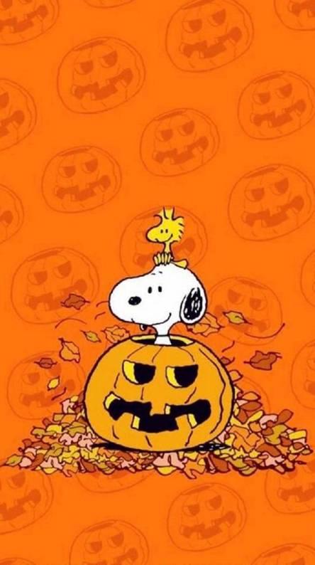 Aesthetic Cute Fall Pumpkin Wallpaper Best Season Ideas