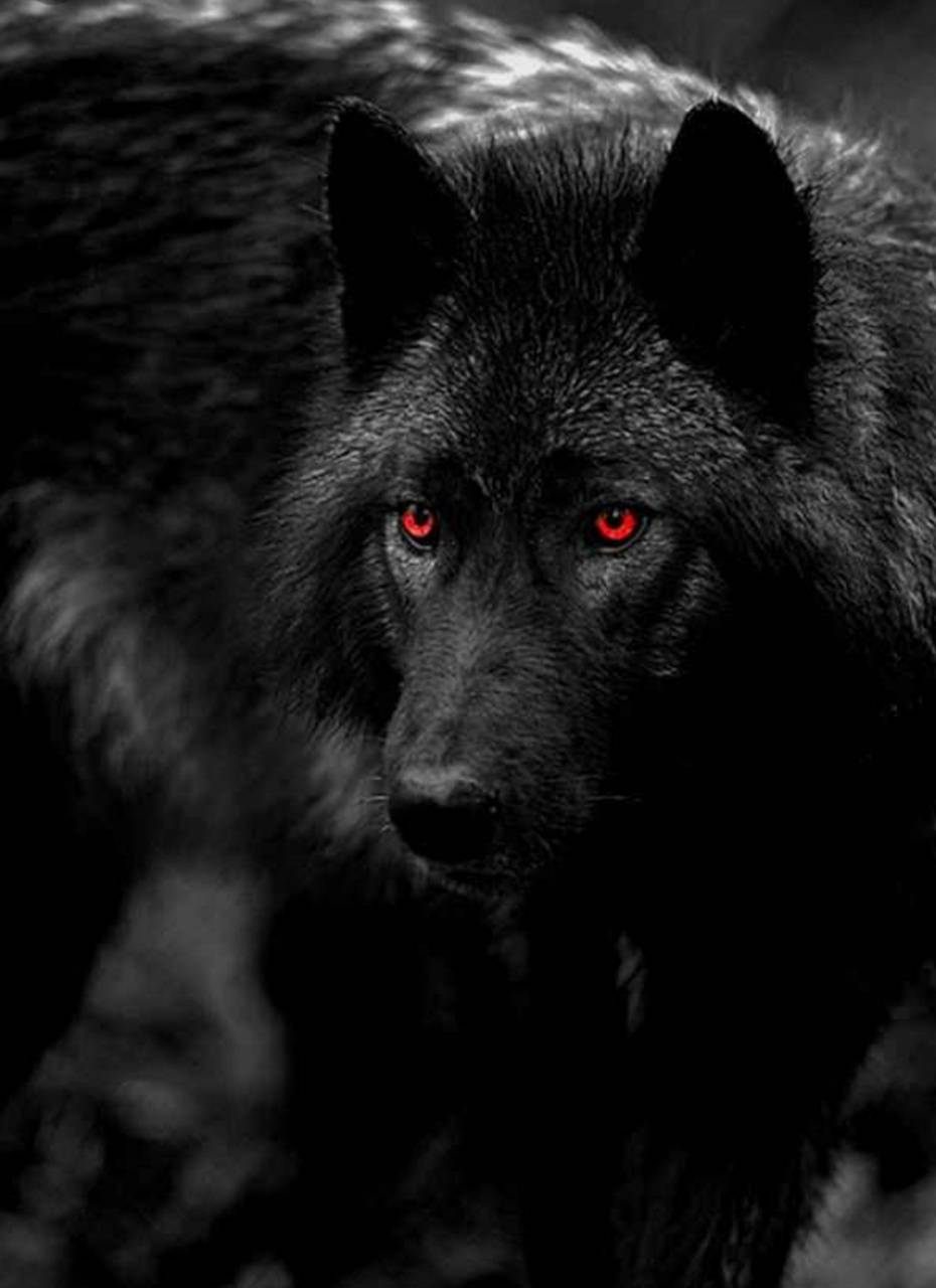 Red Eye Wallpaper By Shawneeta 36 Free On Zedge