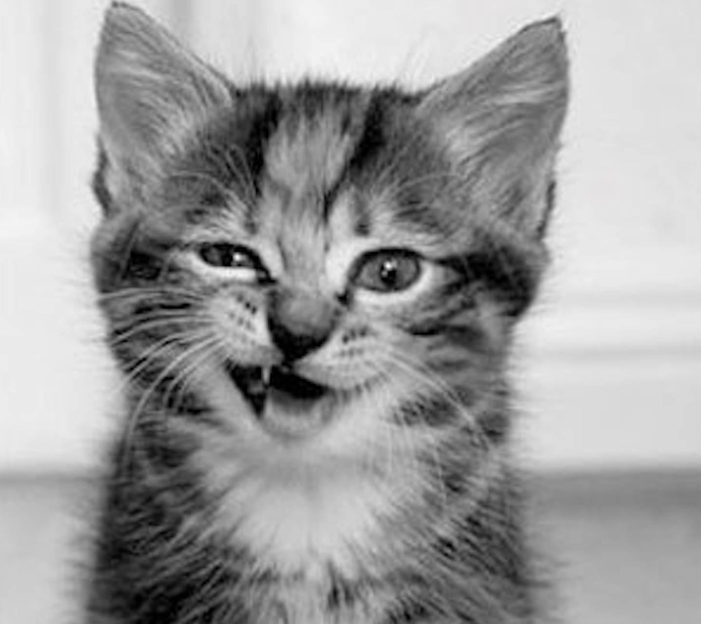 Cat Lip