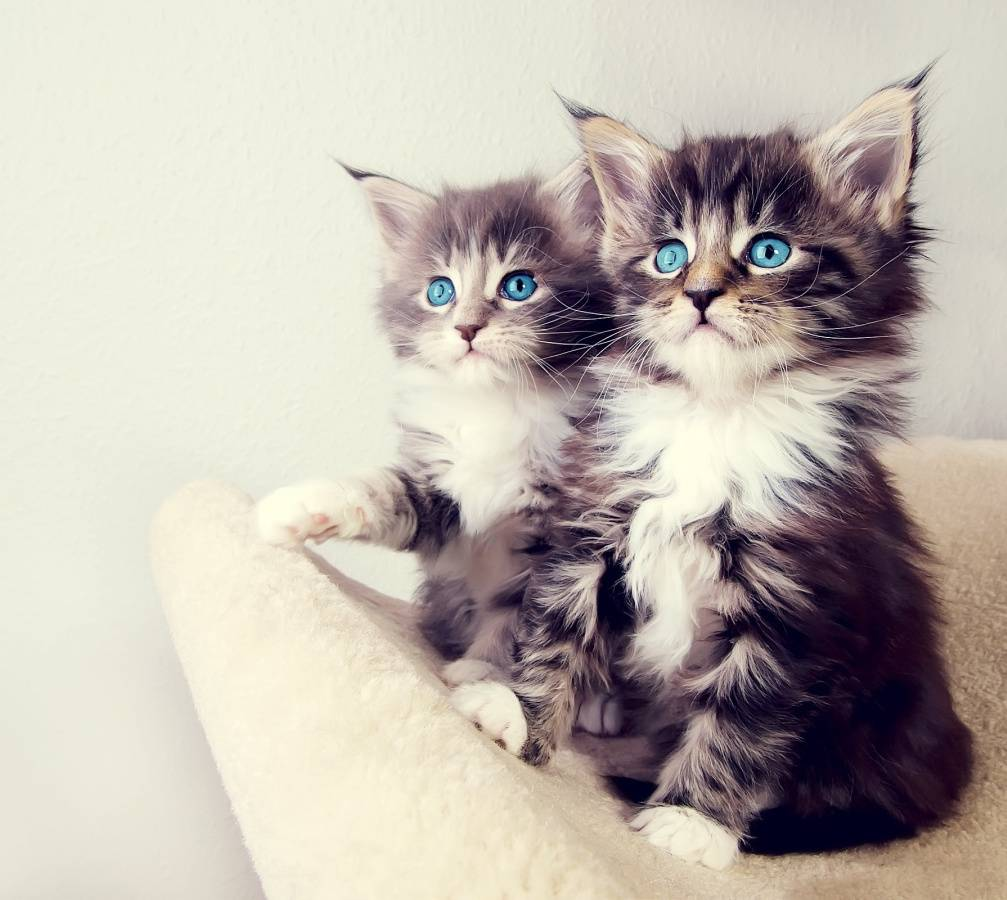 Kitten Xperia Arc