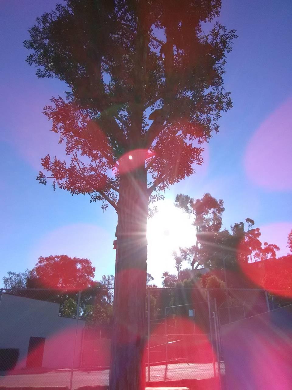 VZW TREE VISTA CA