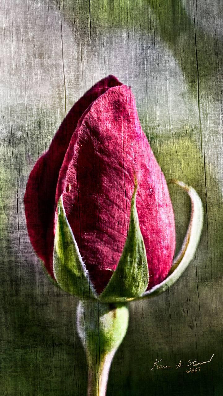 BSI Rosebud