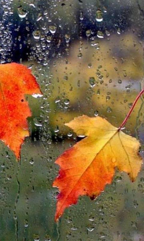 Осень анимация в картинках на телефон, день