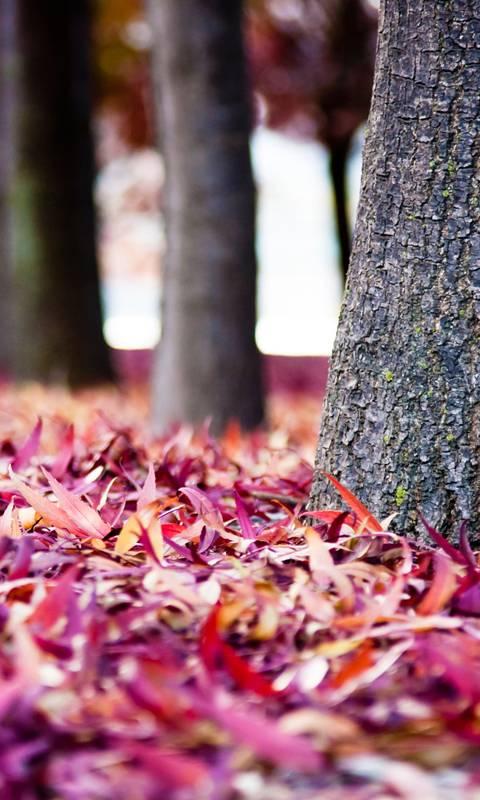 Leaves Tree