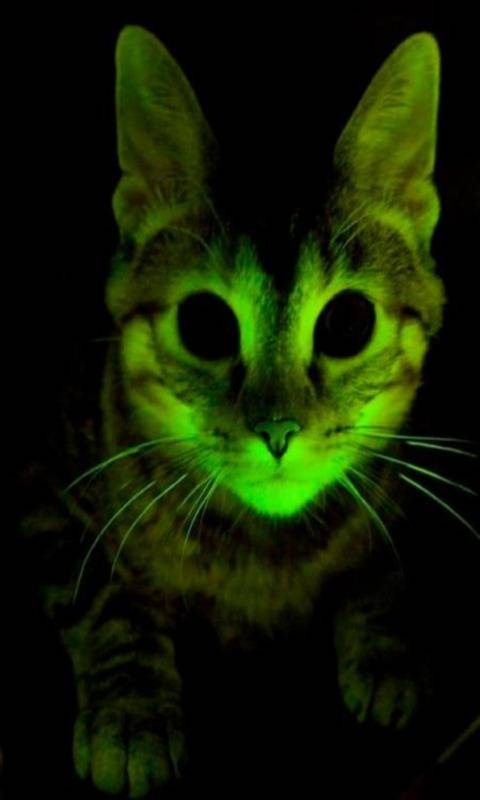 Neon Cat Wallpaper By Saffy 46 Free On Zedge