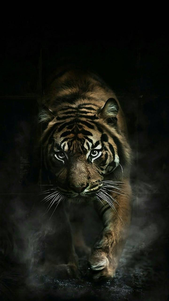 Tiger Wallpaper By Enirti 32 Free On Zedge