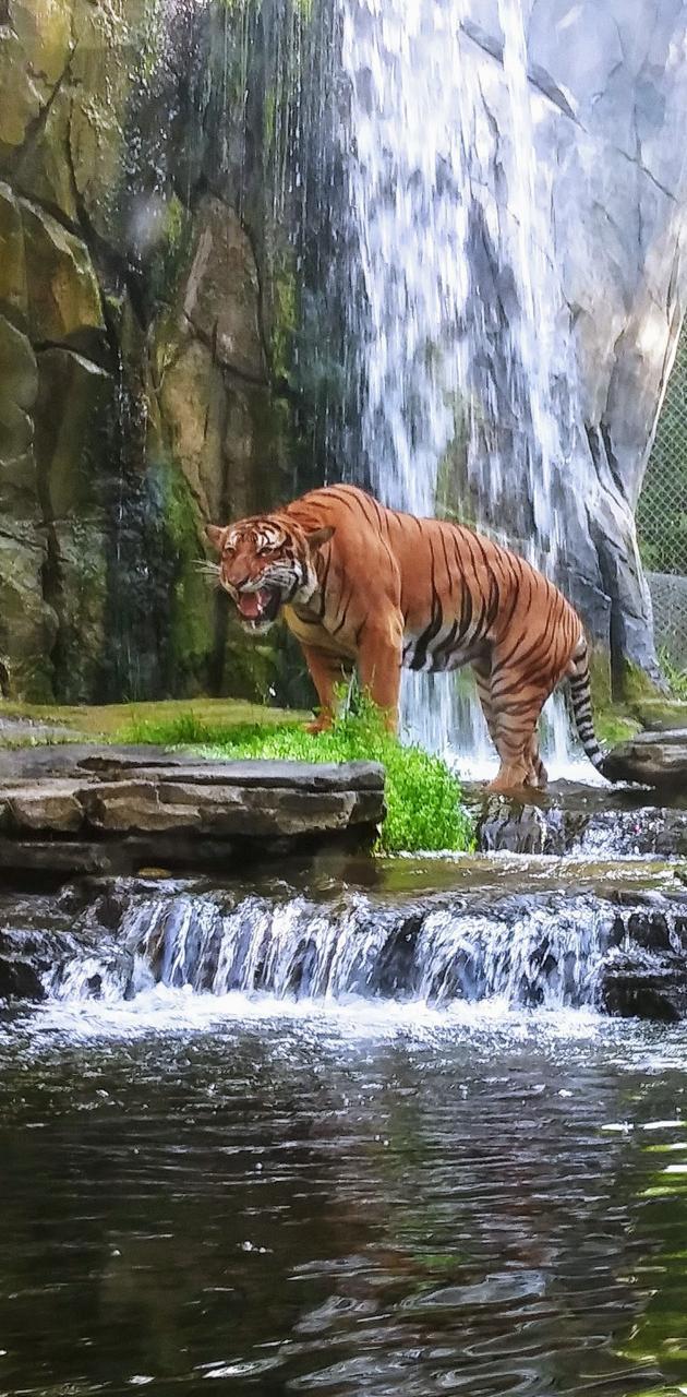 Jaya  Jax Zoo