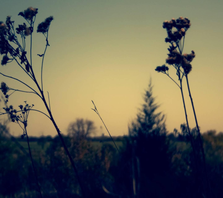 Faded Sundown