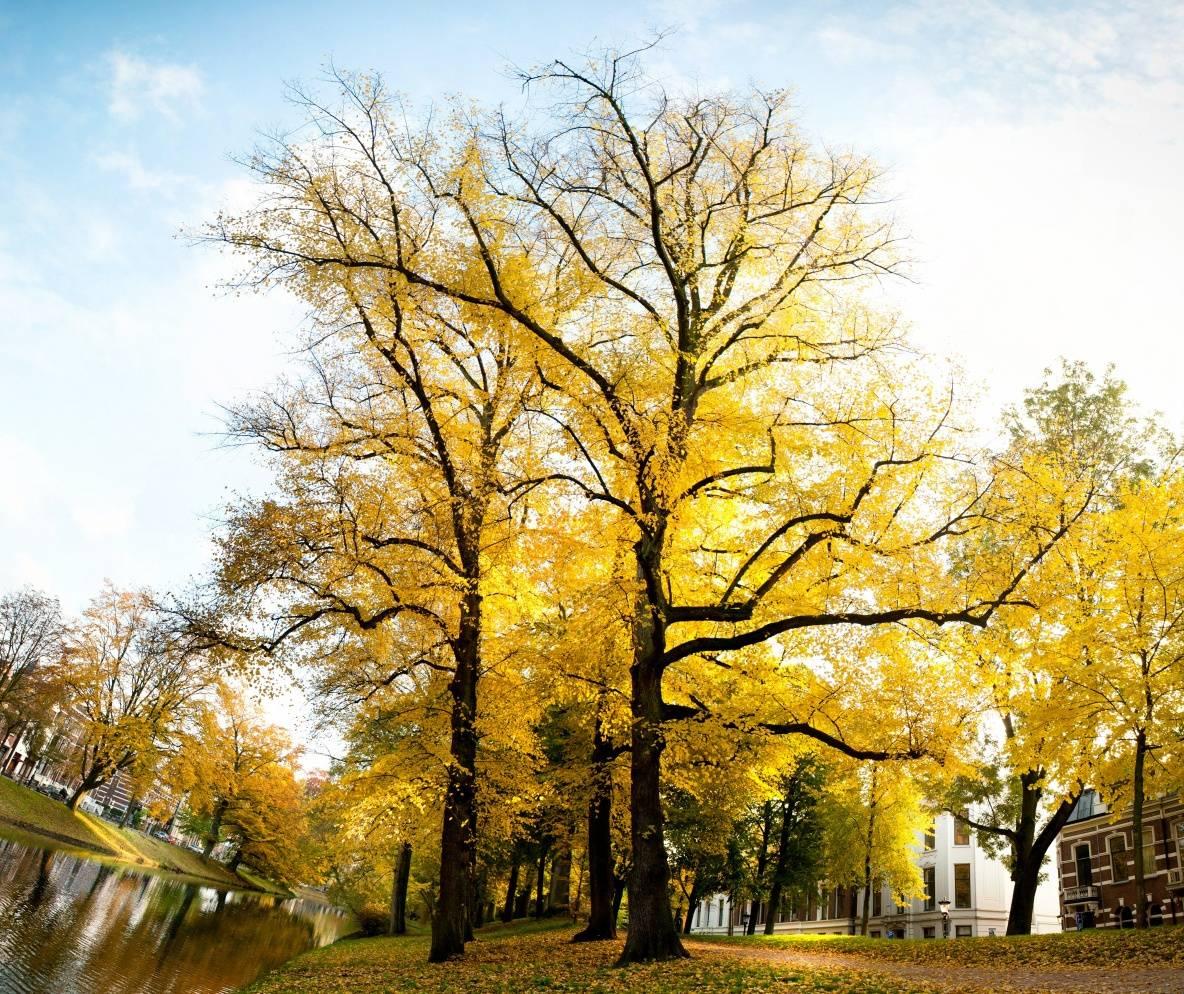 Beautiful Autumn Hd